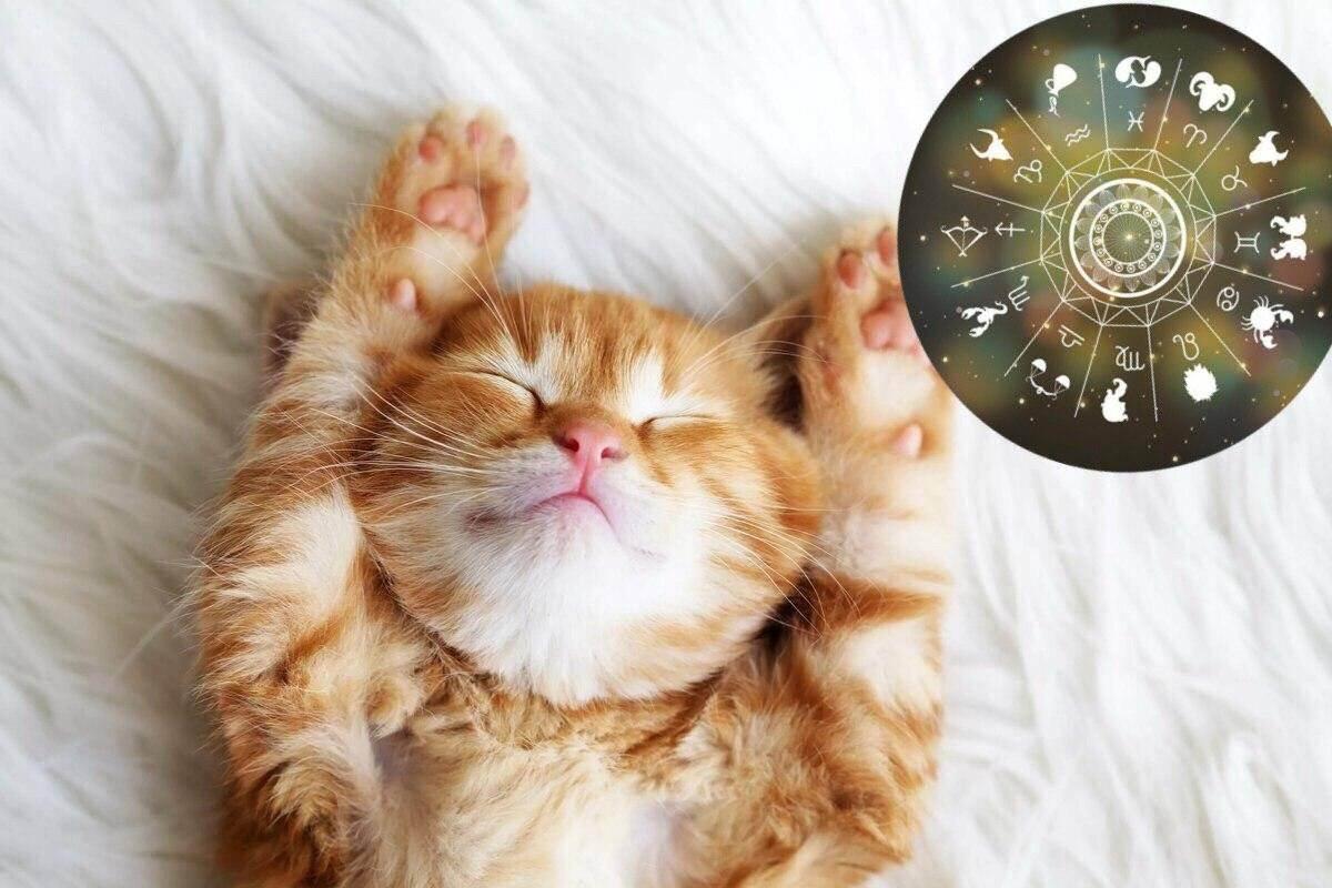 Кошачий гороскоп: по дате рождения и совместимостью с человеком