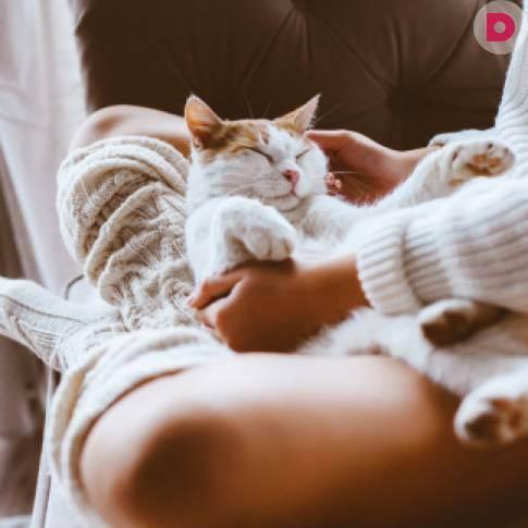 Целебная сила кошки: здоровье и фитнес - женская социальная сеть myjulia.ru