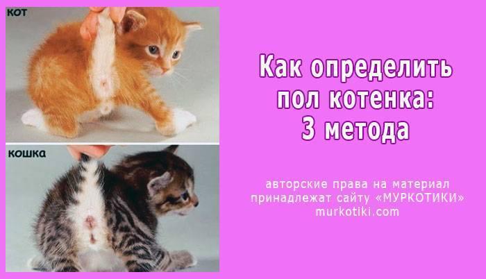 Кот или кошка: как определить пол?