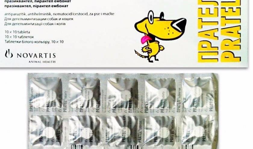 Инструкция по применению антигельминтика для кошек прател