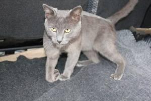 У кота отнимаются задние лапы: почему и что делать, если питомцу отказали ноги?