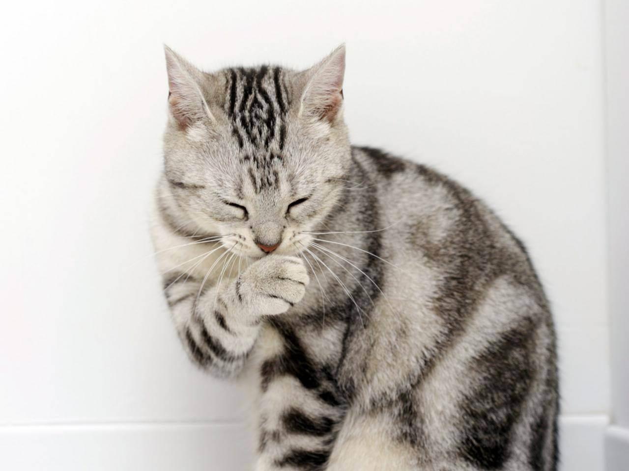 Отравление у кошек: симптомы и лечение