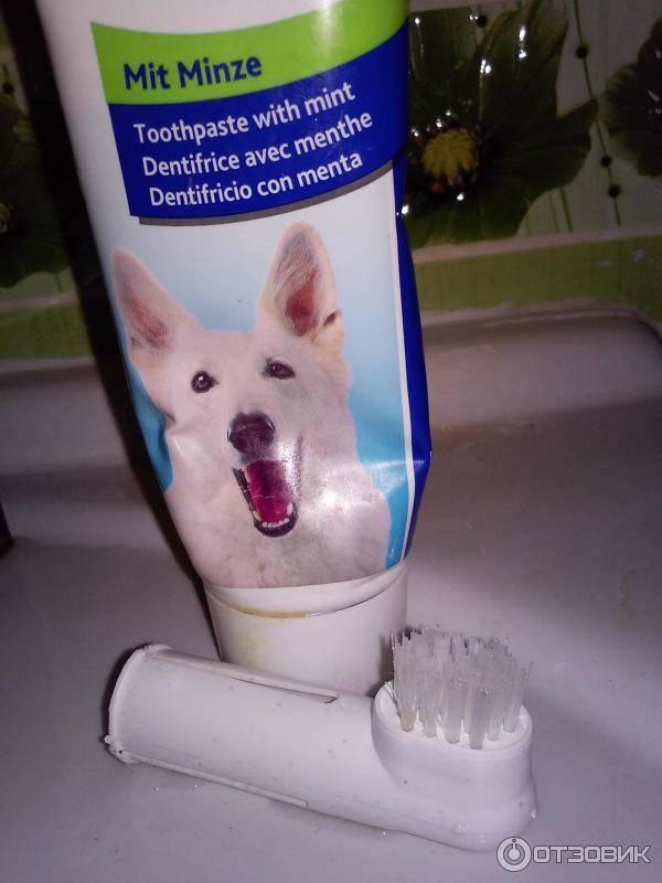 Способы чистки зубов у кошки, используемые средства и необходимость процедуры