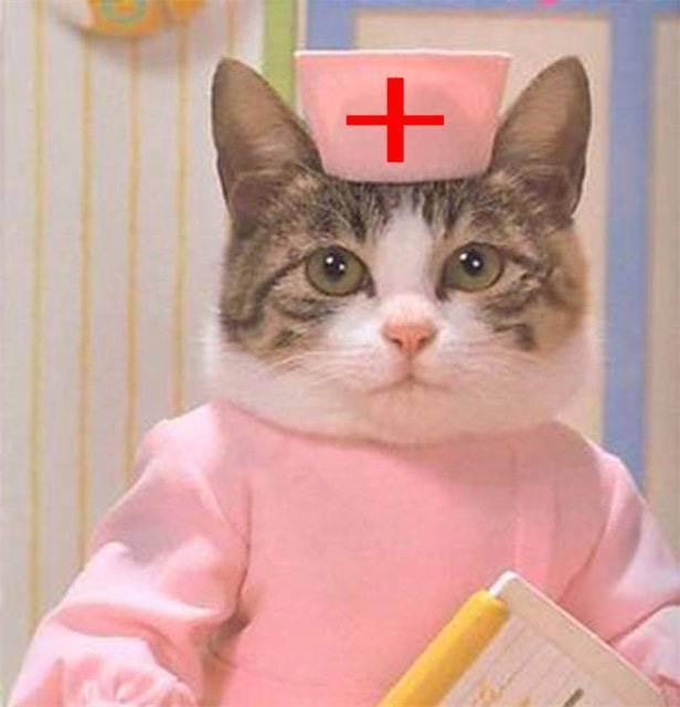 Животные в доме: польза и вред для младенца - запись пользователя zvezar (id1953651) в сообществе благополучная беременность в категории статьи, полезная информация - babyblog.ru