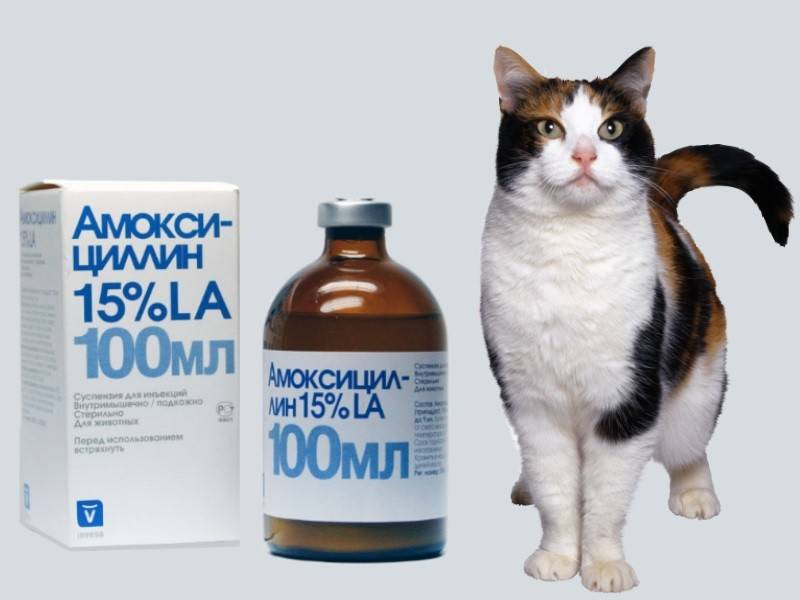 Антибиотики для кошек и котов | широкого спектра, какой дать, как и куда колоть