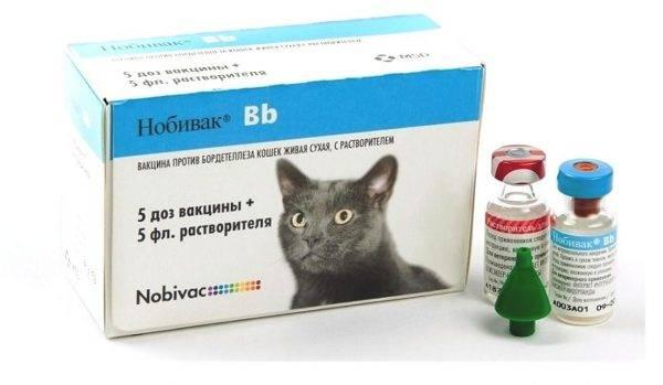 Вакцина трикет для кошек инструкция
