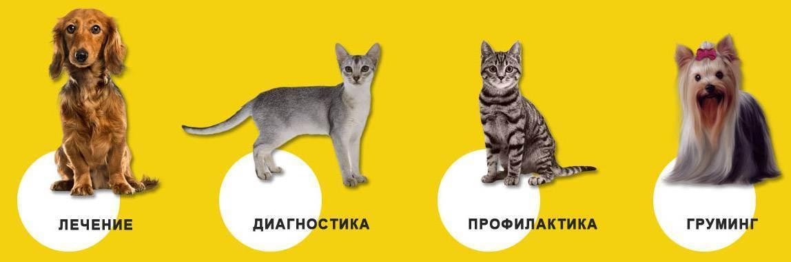 Лечение домашних животных в санкт-петербурге: цены, отзывы и адреса
