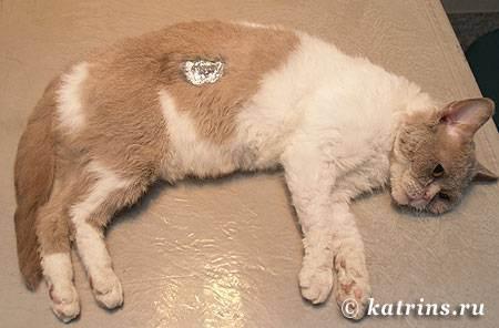 Как проводится химическая кастрация собак?