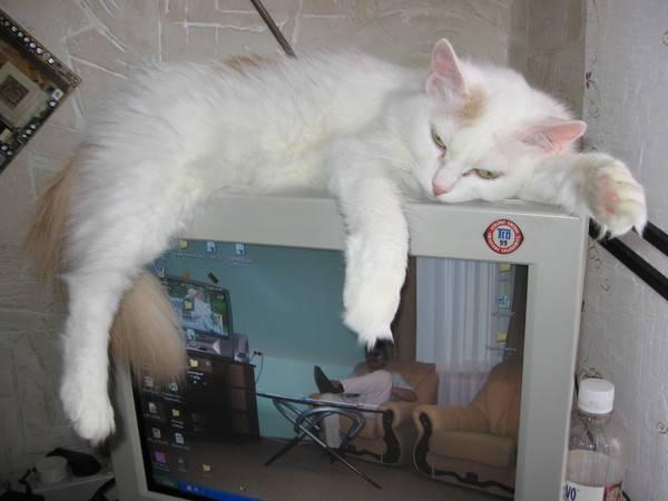 Примета: кот нагадил на кровать или на пороге, хотя приучен к лотку