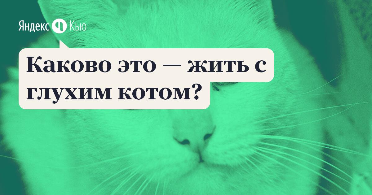 Причины глухоты у кошек