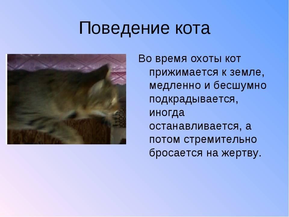 Привычки и повадки кошек | noteru.com