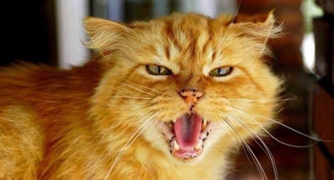Почему кошка ездит на попе. причины, по которым кошка ездит на попе и катается на спине как распознать симптомы