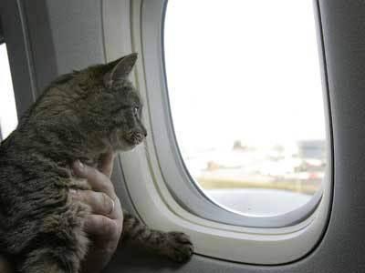 Путешествуем с кошкой: как перевозить кошек | мурчики