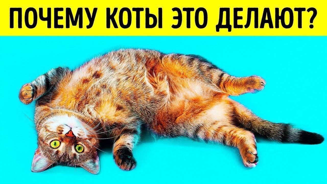 Что делать, если кошка постоянно лижет под хвостом?
