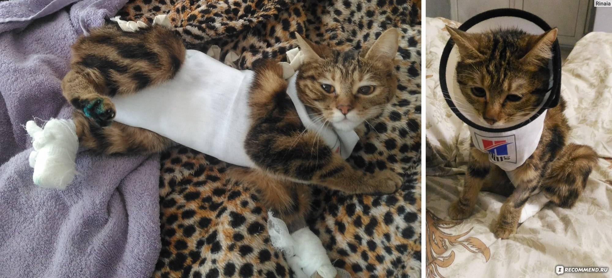 Сколько в среднем живут кошки домашние стерилизованные, влияет ли кастрация на продолжительность жизни котов?