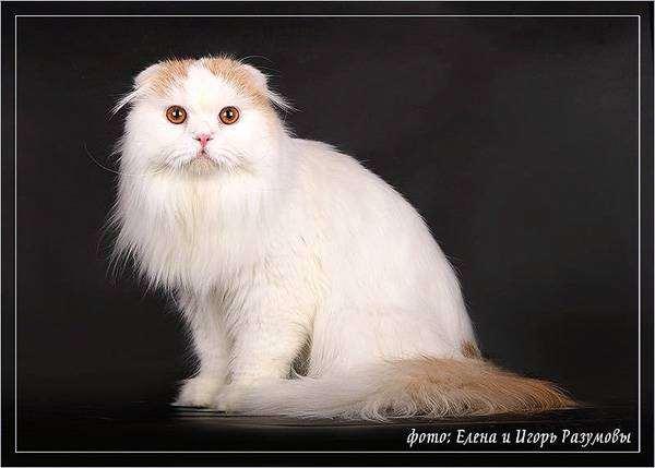 Чесалка для кошек. виды и правила применения покупных и самодельных присбособлений