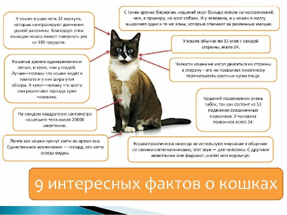 Что значит если кот топчет вас лапками: разбираем во всех подробностях