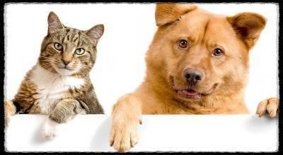 Какие собаки уживаются с кошками
