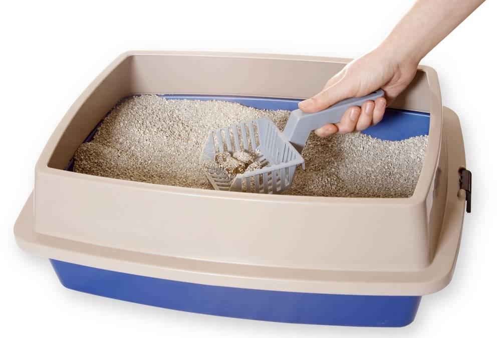 Какой наполнитель для туалета лучше если кошек много