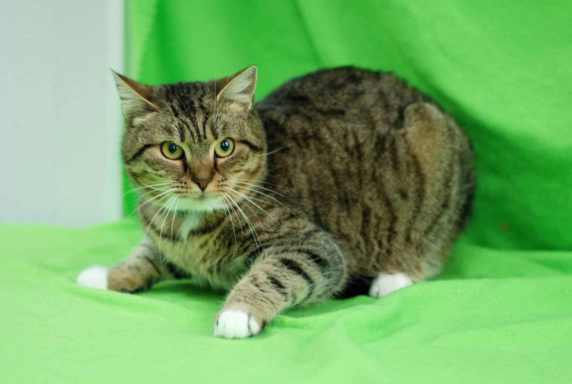 Все о полосатых котах: примеры основных комбинаций окраса, варианты выбора клички