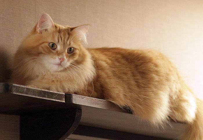 Во сколько выпадают зубы у котят. у котенка режутся зубы: что надо делать и что не надо