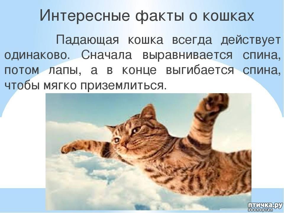 Интересные факты о кошках: 10 любопытных особенностей пушистых питомцев