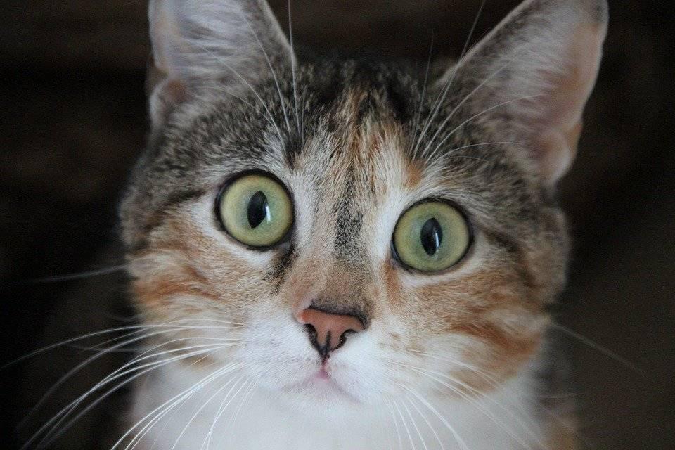 Анорексия у кошек – причины и список препаратов для лечения