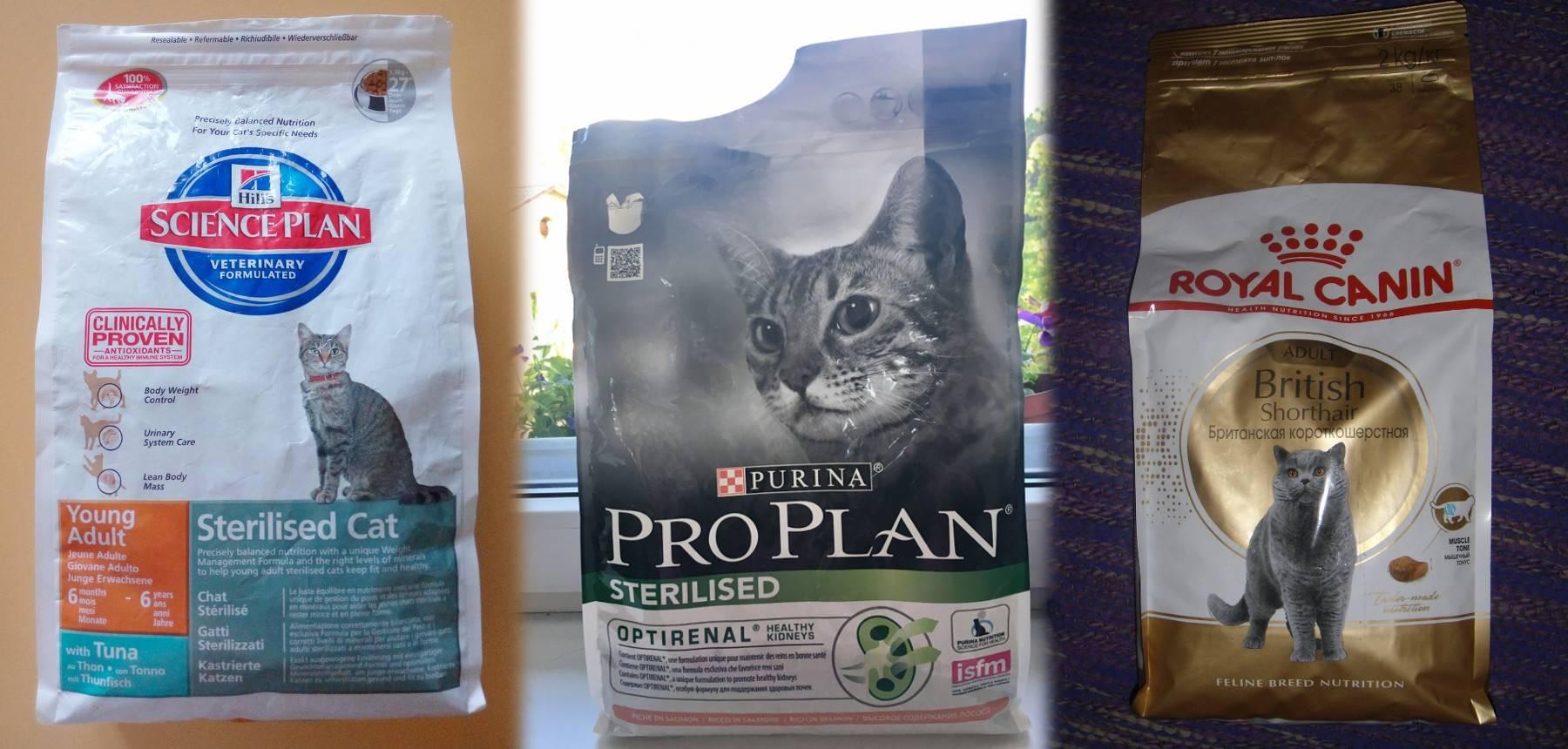 Сравнение кормов для кошек: классы, составы, бренды