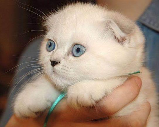 Соотношение возраста кошки и человека