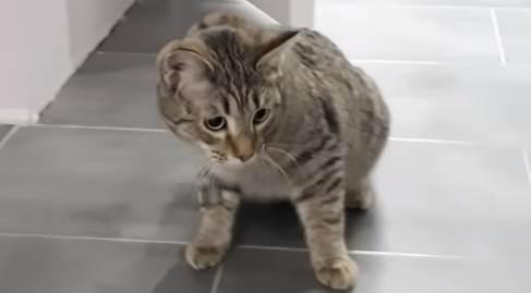 Кошка или кот гадит: как отучить кошку гадить в неположенном месте?