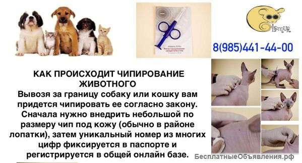 """Чипирование собак и кошек в спб: описание и стоимость. """"лаки"""""""