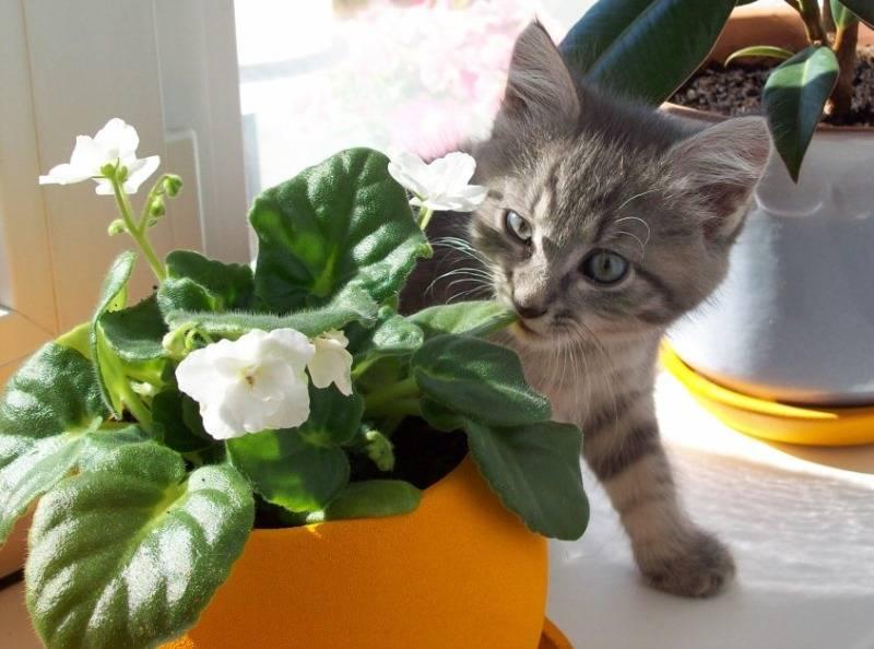 Безопасные и полезные комнатные растения и травы для кошек - новый день