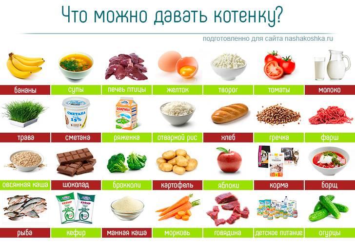 Чем нельзя кормить кошек: список продуктов