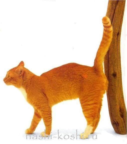 Как отучить взрослого кота метить