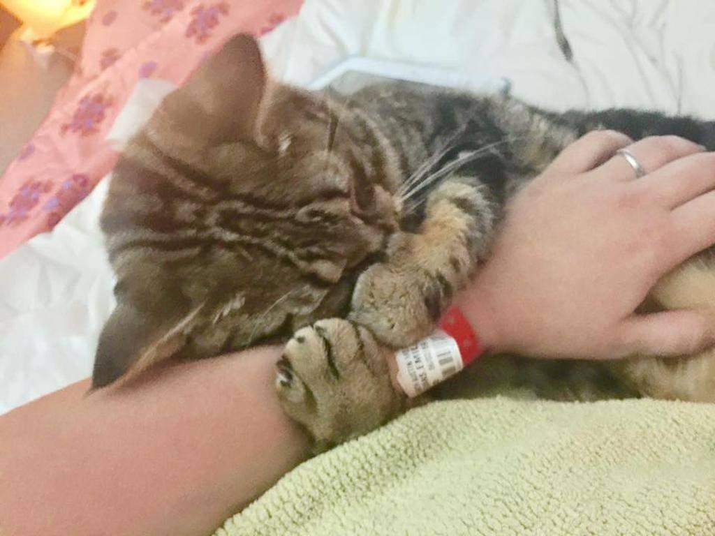 Почему нельзя обнимать котов и кошек - друг - медиаплатформа миртесен