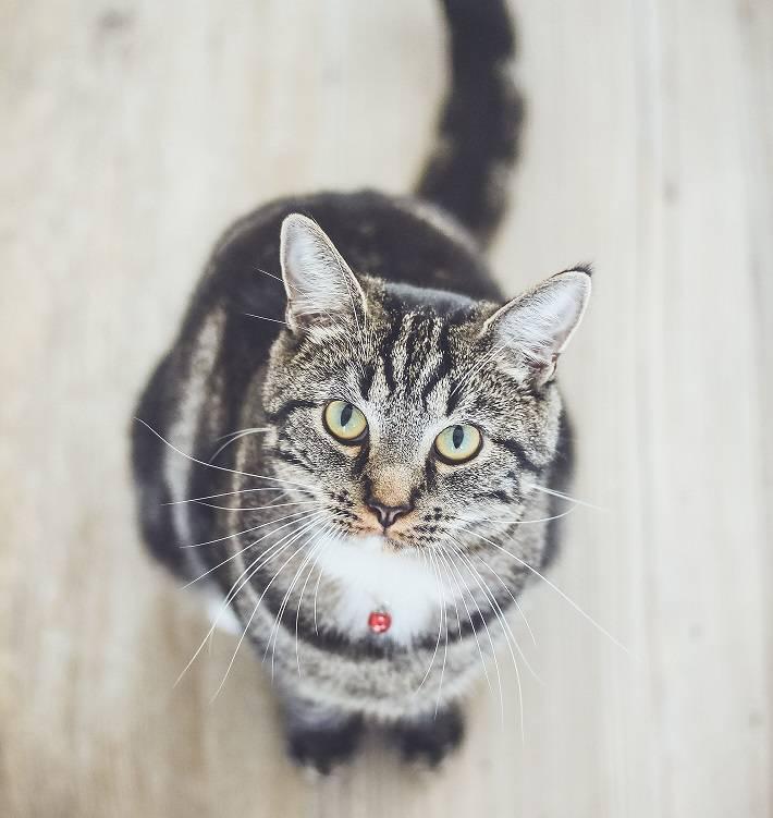 Основные причины, почему кошка нервничает