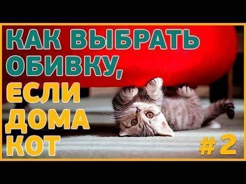 Антивандальная ткань для дивана: защищаем обивку от кошки