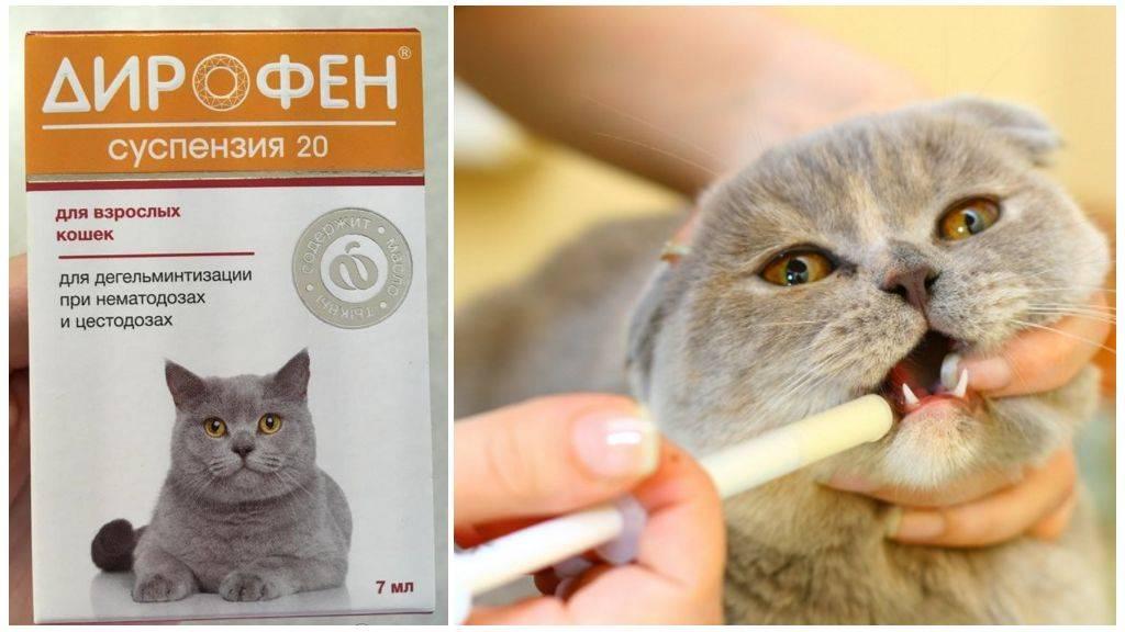Инструкция по применению препарата Лобелон для кошек