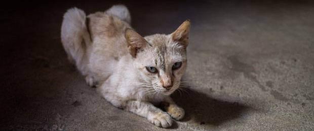 Кормим кошку правильно натуральной едой: чем кормить в домашних условиях, советы ветеринаров и меню