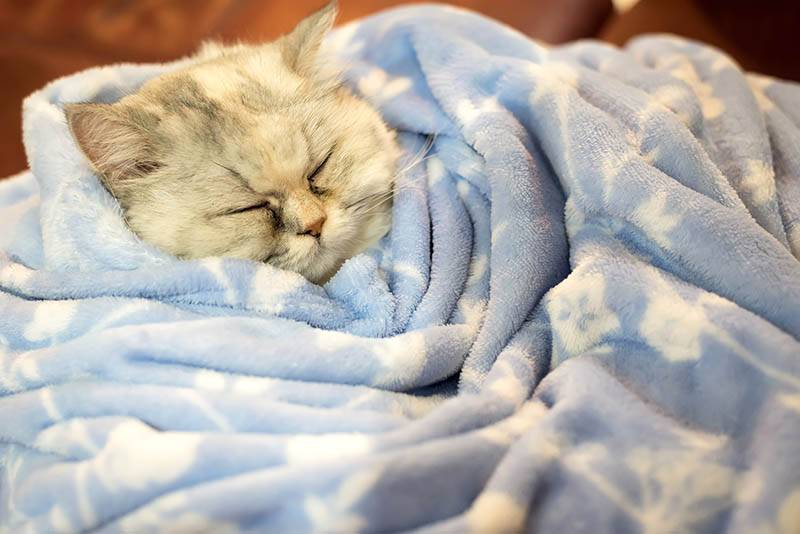 """Почему кошки прячутся? — обсуждение в группе """"кошки""""   птичка.ру"""