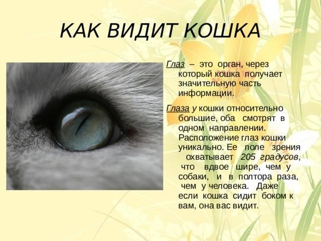 Могут ли кошки видеть души умерших, призраков, домовых и прочую мистику