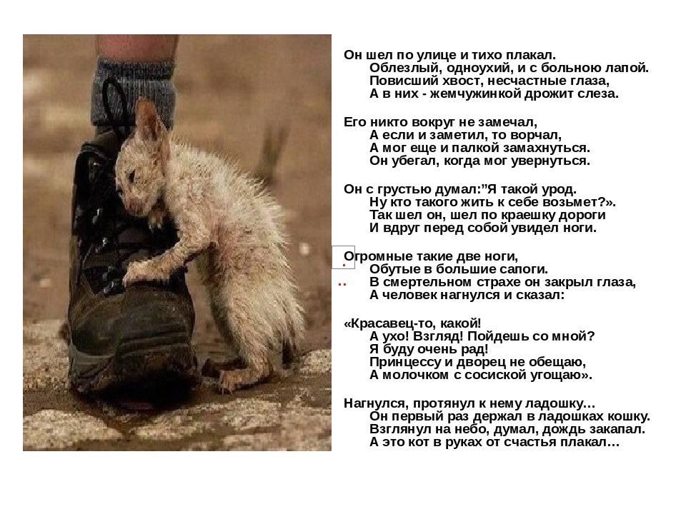 Почему кот постоянно мяукает и орет: разберемся в этих причинах - kupipet.ru