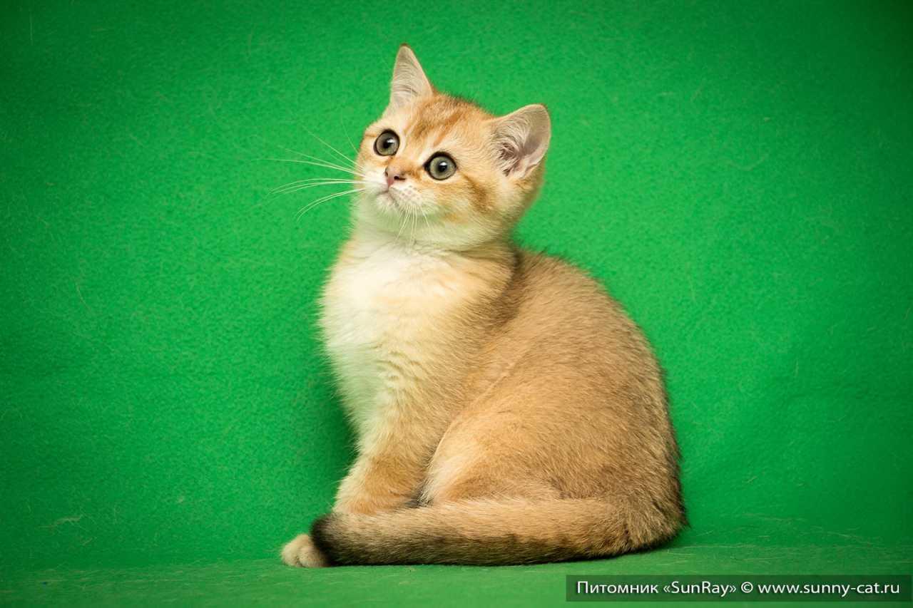 В каком возрасте лучше брать котенка – основные факторы в правильном развитии котят