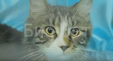 Кровь в рвоте у кошки причины лечение