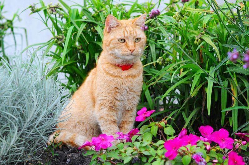 Кошку укусил клещ что делать? лечение и последствие укуса клеща