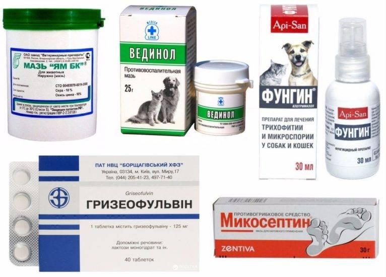 Мазь от лишая: наиболее эффективные препараты для кошек