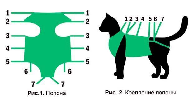 Попона для кошки: после стерилизации, от дождя и другие, как выбрать, сделать своими руками, использование послеоперационного бандажа