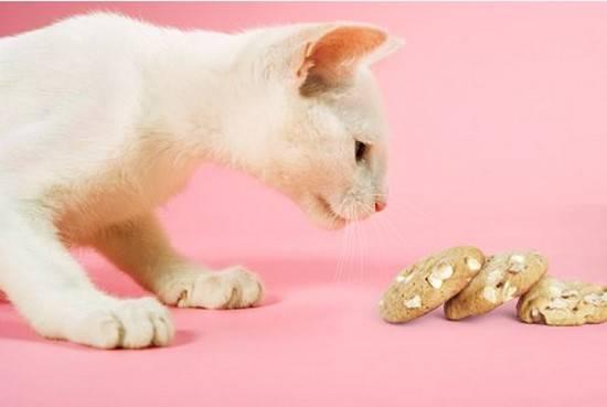 Кошка не ест, ест плохо, нет аппетита или он плохой - симптомы, лечение, препараты, причины появления | наши лучшие друзья