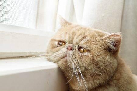 7 тревожных симптомов, на которые хозяева кошек не всегда обращают внимание