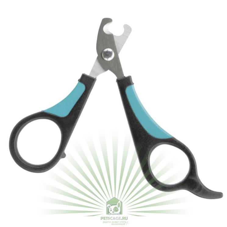 Узнай как обрезать когти собаке в домашних условиях правильно